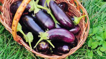 Patlıcanların acısını almak için
